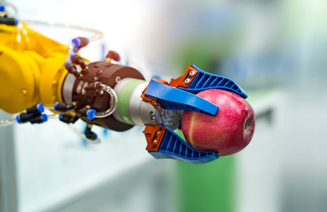 A fruit picking robot named Clive (this is not a picture of Clive) is getting to work this year. Picture: Shutterstock.